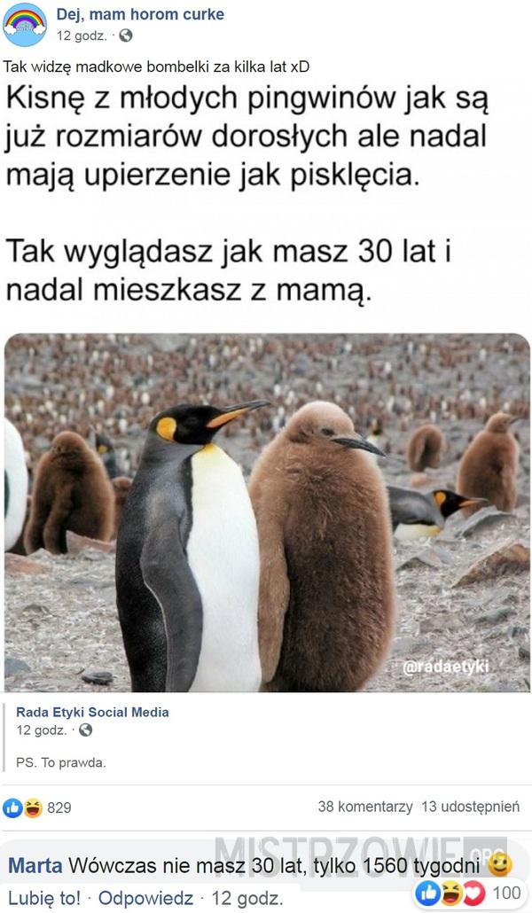 Pingwiny –